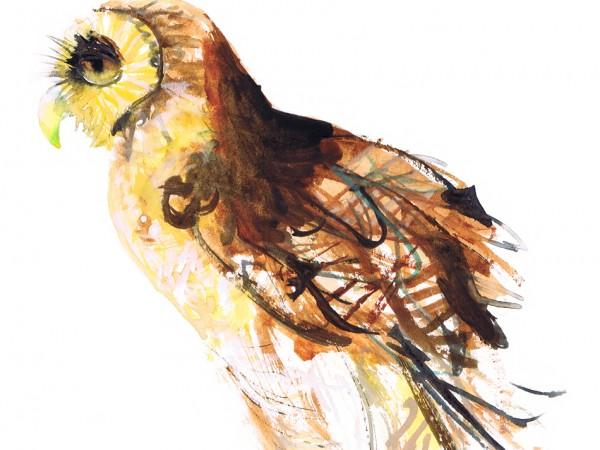 owlsideview